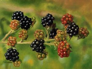 Blackberries by Bill Makinson