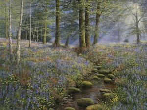 Bluebell Wood by Bill Makinson