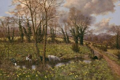 Cattle And Daffodils by Bill Makinson