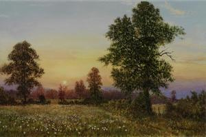 Evening Daisies by Bill Makinson