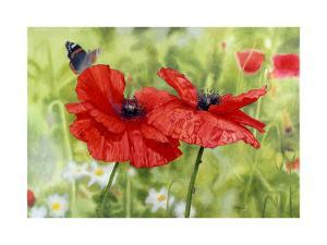 Poppies And Butterfly by Bill Makinson