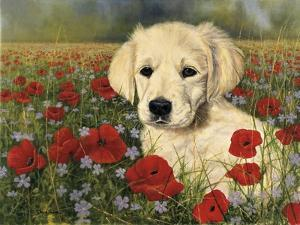 Puppy And Poppies by Bill Makinson