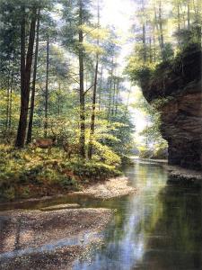 Quiet Forest by Bill Makinson
