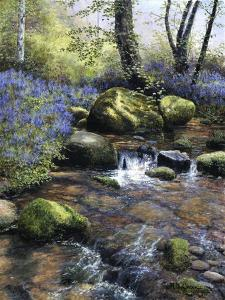 Shallow Brook by Bill Makinson