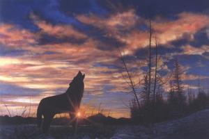Sky Wolf by Bill Makinson