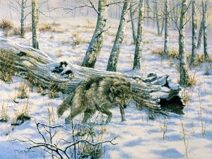 Snow Wolf by Bill Makinson