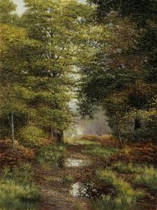Woodland In The Fall by Bill Makinson