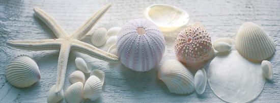bill-philip-driftwood-shells-ii