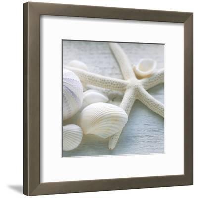Driftwood Shells III