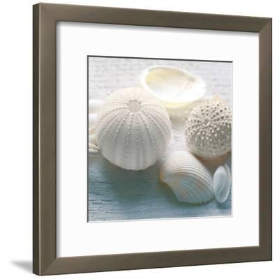 Driftwood Shells IV