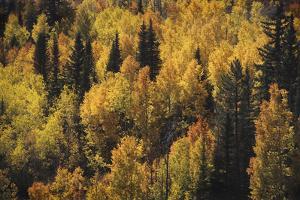Lost In Fall by Bill Philip