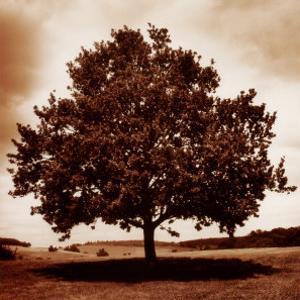 Meadow Land III by Bill Philip