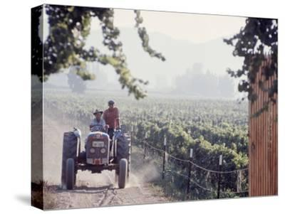 Workers on a Tractor at the Conchay Toro Vineyards, Chile