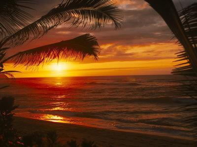 Sunset on the Ocean with Palm Trees, Oahu, HI