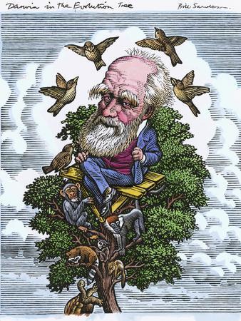 Charles Darwin In His Evolutionary Tree