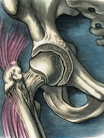 Hip Joint, Artwork
