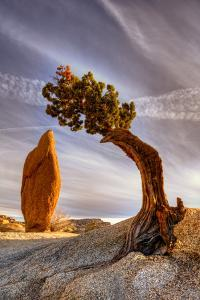 Balance Rock and Bonzai Tree by Bill Wight CA