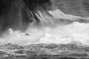 Antarctica, South Atlantic. Cormorant Flying over Frothing Sea by Bill Young
