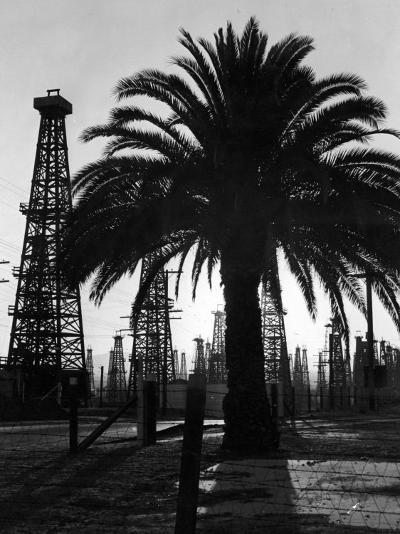 Billowing Palm Tree Gracing the Stark Structures of Towering Oil Rigs-Alfred Eisenstaedt-Photographic Print