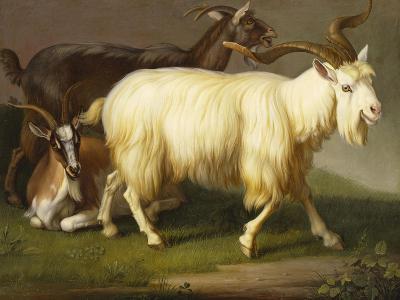 Billy Goats-Johan Wenzel Peter-Giclee Print