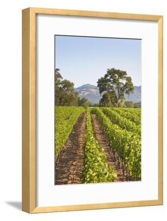 A Lush Green Vineyard in Napa Valley, California
