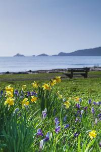 Mumbles, Swansea, Wales, United Kingdom, Europe by Billy