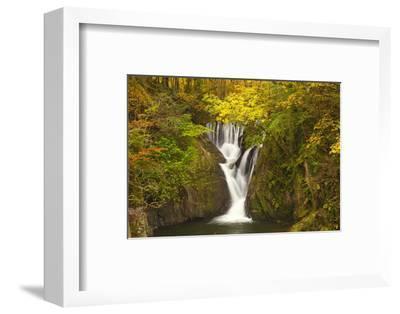 Furnace Falls, Furnace, Dyfed, Wales, United Kingdom, Europe