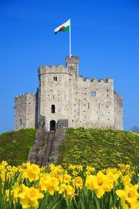 Norman Keep and daffodils, Cardiff Castle, Cardiff, Wales, United Kingdom, Europe by Billy Stock