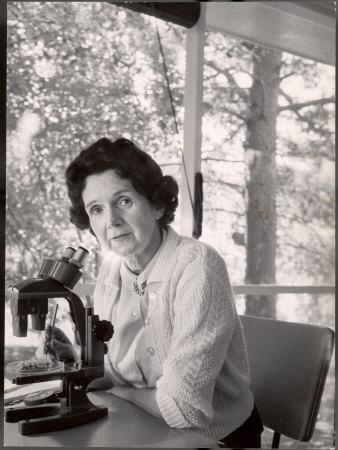 https://imgc.artprintimages.com/img/print/biologist-author-rachel-carson-working-with-microscope-at-her-home_u-l-p76mep0.jpg?p=0