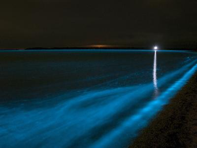 Bioluminescence in Waves in the Gippsland Lakes, Victoria, Australia-Stocktrek Images-Photographic Print