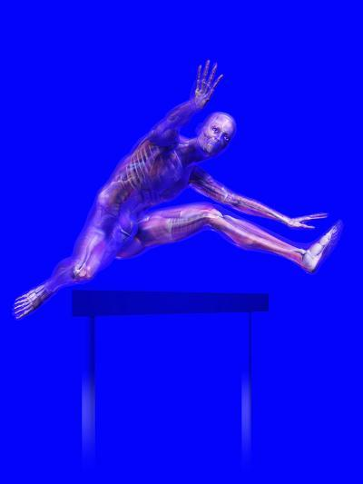Biomedical Illustration of a Man Jumping over a Hurdle, Showing Musculature and Skeleton-Carol & Mike Werner-Photographic Print