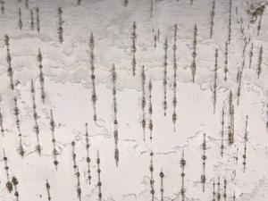 Birch Bark Patterned Background