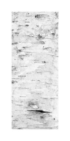 Birch Bark V (BW)-William Neill-Giclee Print