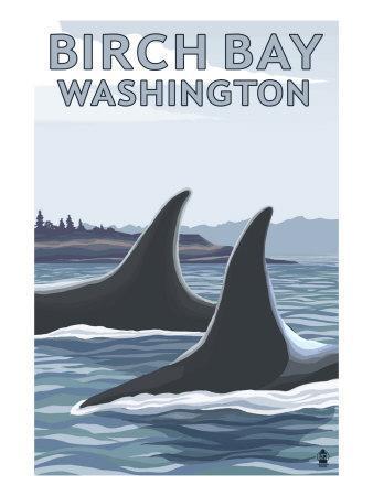 https://imgc.artprintimages.com/img/print/birch-bay-washington-orca-fins_u-l-q1gooew0.jpg?p=0