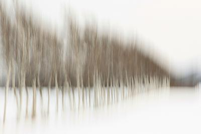 Birch Blur I-Larry Malvin-Photographic Print