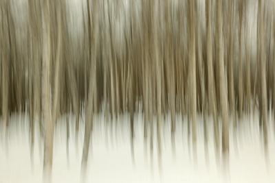 https://imgc.artprintimages.com/img/print/birch-blur-ii_u-l-q10q0ey0.jpg?p=0