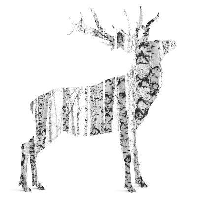 Birch - Buck - Silhouette--Photographic Print