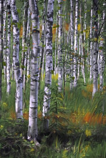 Birch Trees in Field--Art Print