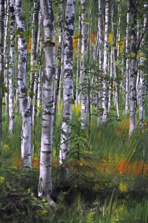 Birch Trees in Field