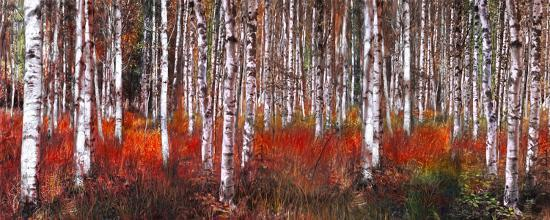 Birch Trees in Red--Art Print