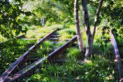 Birch Trees Of High Line Park, New York City-George Oze-Photographic Print