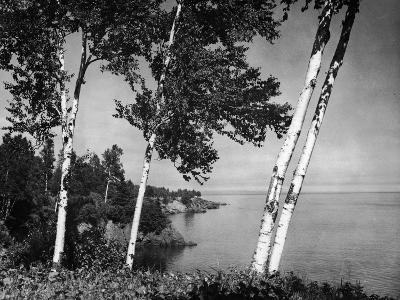 Birch Trees on Lake Superior Shore-Hulton Archive-Photographic Print