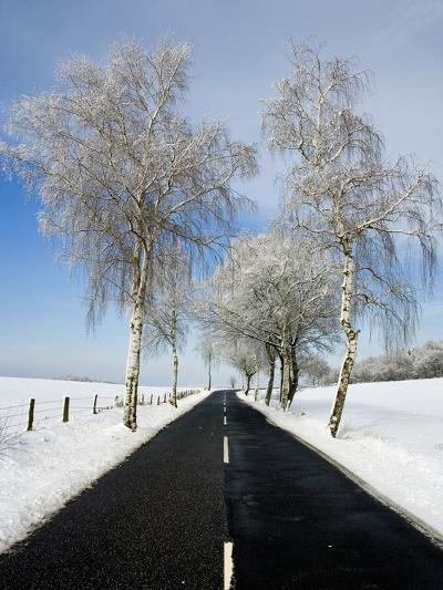 Birch Trees on Side of Road in Winter-Frank Lukasseck-Photographic Print