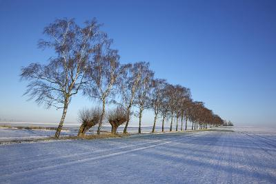 Birches at a Country Lane and Snow-Covered Fields on the Baltic Sea Island Poel Near Wismar-Uwe Steffens-Photographic Print