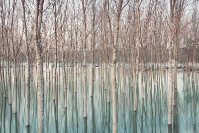 Birches in Flooded Countryside, Natural Pattern-Spumador-Photographic Print