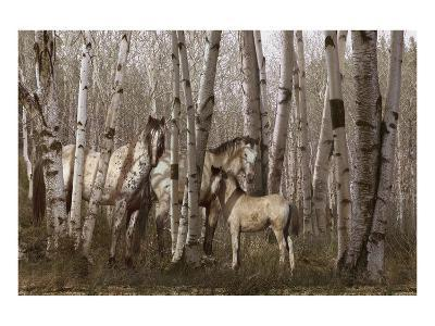 Birchwood Family-Steve Hunziker-Art Print