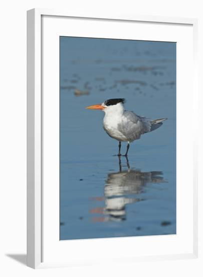 Bird 3-Lee Peterson-Framed Photographic Print