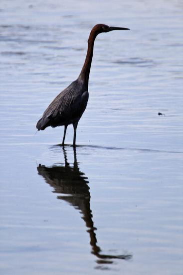 Bird 4-Lee Peterson-Photographic Print