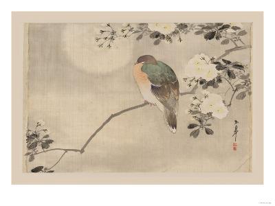 Bird and Cherry Blossoms--Art Print