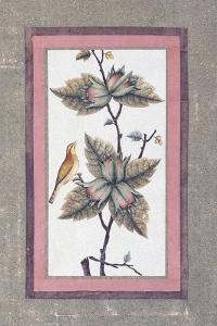 Bird and Flower Study, C.1780
